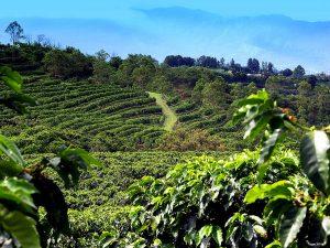 la-doka-coffee-estate-costa-rica-michael-kogan