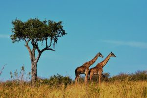 wildlife-1536582_1280